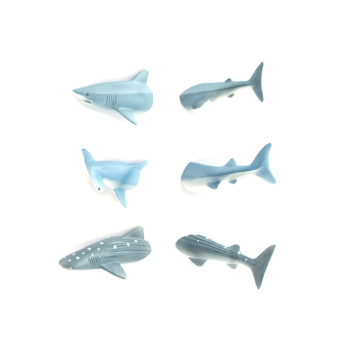 Shark Butt Magnets
